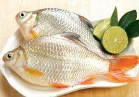 Tổng hợp các món ngon từ cá chép đơn giản làm tại nhà